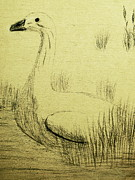 Geese Drawings Prints - The Goose Print by Lori Ball