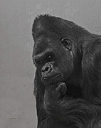 Gorilla Digital Art Metal Prints - The Gorilla Metal Print by Ernie Echols