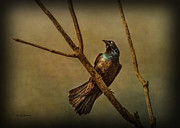 Common Grackle Posters - The Grackle Poster by Jeff Swanson