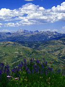 Raymond Salani Iii Photos - The Grand and Lupines by Raymond Salani III