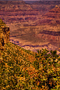 Counties Framed Prints - The Grand Canyon II Framed Print by David Patterson