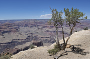 Jerry McElroy - The Grand Canyon