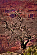 Trails Prints - The Grand Canyon VIII Print by David Patterson