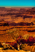 Trails Prints - The Grand Canyon X Print by David Patterson