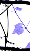 Grape Leaf Framed Prints - The Grape Leaf Framed Print by Kah Wah Tan