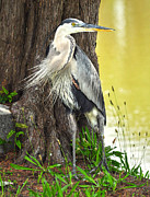 Donnie Smith Framed Prints - The Great Blue Heron Framed Print by Donnie Smith