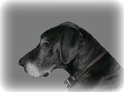 The Great Dane Print by Barbara S Nickerson