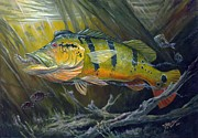 Striped Marlin Painting Posters - The Great Peacock Bass Poster by Terry  Fox