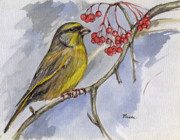 Berry Drawings - The Greenfinch by Angel  Tarantella