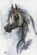 Watercolor  Drawings - The Grey Arabian Horse 10 by Angel  Tarantella