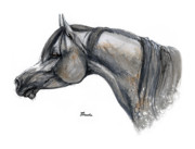 Neck Drawings - The Grey Arabian Horse 11 by Angel  Tarantella