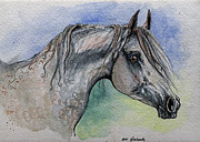 Horse Drawing Painting Prints - The Grey Arabian Horse 14 Print by Angel  Tarantella