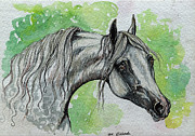 Horse Drawing Painting Prints - The Grey Arabian Horse 15 Print by Angel  Tarantella