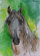 Horse Drawing Framed Prints - The Grey Arabian Horse 17 Framed Print by Angel  Tarantella