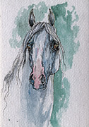 Horse Drawing Painting Prints - The Grey Arabian Horse 4 Print by Angel  Tarantella