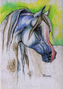 White Horses Drawings Prints - The Grey Arabian Horse 6 Print by Angel  Tarantella