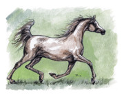 Horse Drawing Posters - The Grey Arabian Horse 8 Poster by Angel  Tarantella