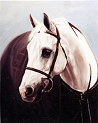 Show Horse Paintings - The Grey by Janet  Crawford