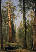 Famous Artists - The Grizzly Giant Sequoia Mariposa Grove California by Albert Bierstadt