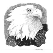 Eagle Drawing Drawings Originals - The Guardian by Paul Shafranski