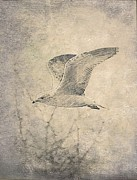 Abstract Canvas Drawings Prints - The Gull Print by Amanda Struz