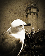 Alcatraz Lighthouse Posters - The Gull Poster by Dale Simmons