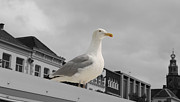 Gull Seagull Framed Prints - The Gull Framed Print by Stefan Kuhn
