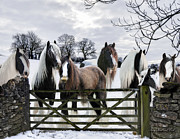 Gypsy Horse Prints - The Gypsies Print by Terry Kirkland Cook