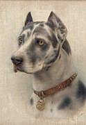 The Head Of A Doberman Print by Wilhelm Schwar