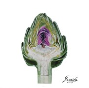 Graciela Castro - The heart of an artichoke