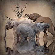 Herd Of Elephants Posters - The Herd Poster by Sharon Lisa Clarke