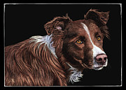 Border Collie Drawing Posters - The Herder Poster by Ann Ranlett