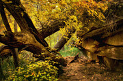 Oak Creek Photos - The Hidden Path  by Saija  Lehtonen