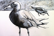 Sandpiper Drawings Prints - The Hierarchy Print by Melissa Rubin