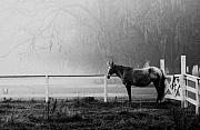 Lowcountry Metal Prints - The horse and the fog Metal Print by Scott Hansen