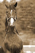 Poem Framed Prints - The Horse Framed Print by Daniel Csoka