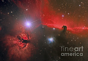 Reflection Nebula Posters - The Horsehead Nebula Poster by Reinhold Wittich