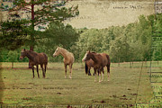 Cabin Wall Framed Prints - The Horses Framed Print by Paulette Wright