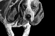 Basset Hound Framed Prints - The Hound Framed Print by Camille Lopez