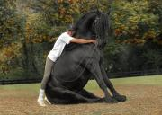 Friesian Photo Posters - The Hug Poster by Fran J Scott