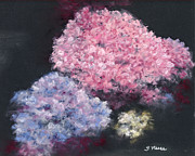 Pink Blossoms Pastels Framed Prints - The Hydrangeas Framed Print by Ginny Neece