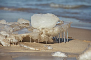 Indiana Dunes Posters - The Ice Crab Poster by Lynne Dohner