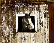 Horse Images Framed Prints - The Inquisitive Equine Framed Print by Brian Graybill