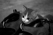 Canvas  Black And White Cat Photos - The Inquisitive Kitty 03 by Thomas Woolworth