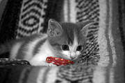 Red Ribbon Digital Art - The Inquisitive Kitty 11 by Thomas Woolworth
