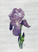 Joan Butler Gore - The Iris
