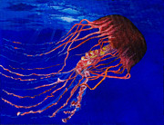 Jelly Fish Paintings - The Jelly by Bob Timmons