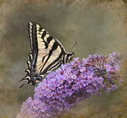 Butterfly On Flower Prints - The Joy of Nectar Print by Angie Vogel
