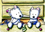 White Terrier Drawings - The Joy Of Socks by Kim Niles