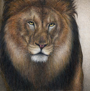 African Lion Painting Framed Prints - The King Grows Weary  Framed Print by Pat Erickson